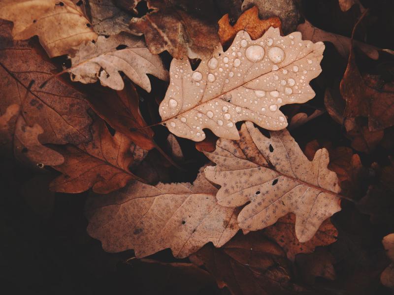 sonbahar şiirleri-iyi21