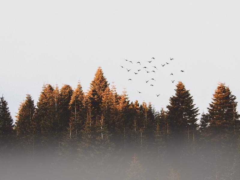 Eylül şiirleri-iyi21