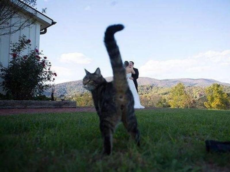 kedi-iyi21
